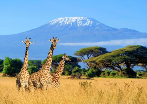 Kenia 1